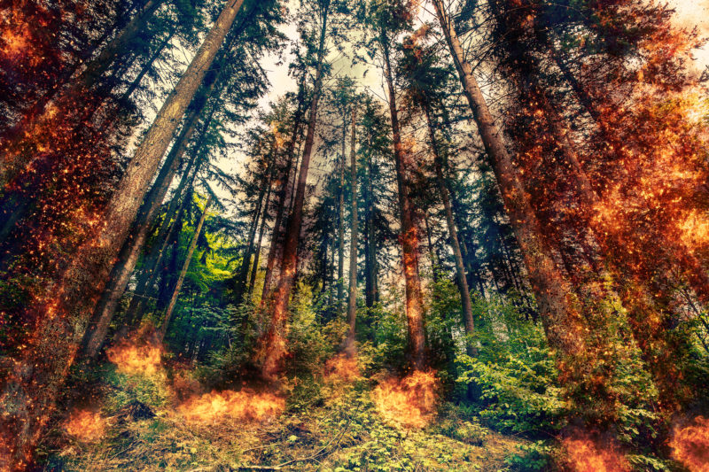 Fire inferno in a green forest at daytime